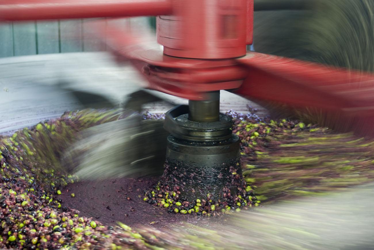 Extraccion de aceite oliva virgen extra presión
