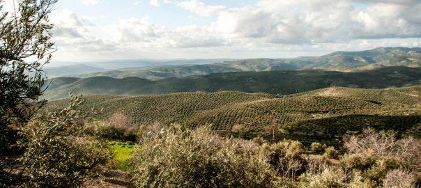 Aceite de oliva royal