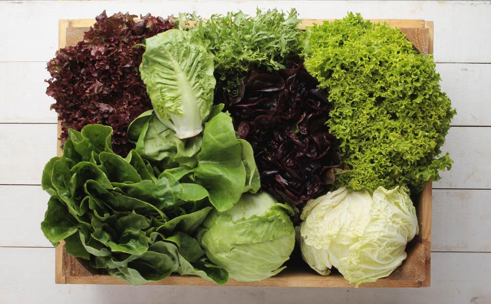 El AOVE mejora la absorción de nutrientes de la lechuga y otras verduras de hoja