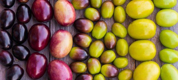 Los mejores aceites de oliva coupage